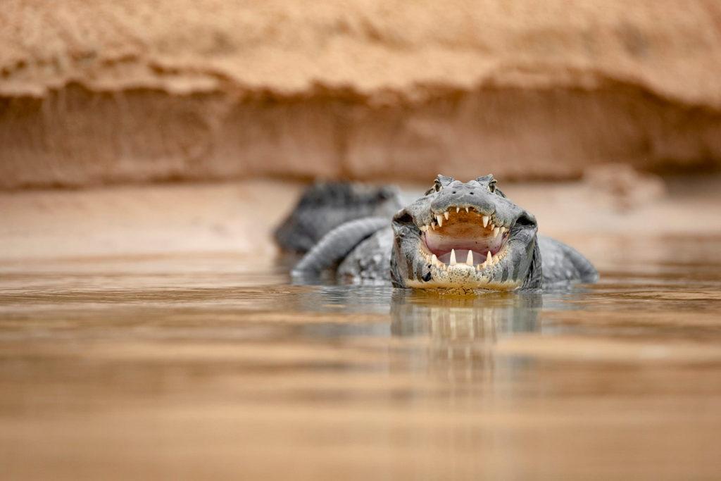 explore-pantanal-06