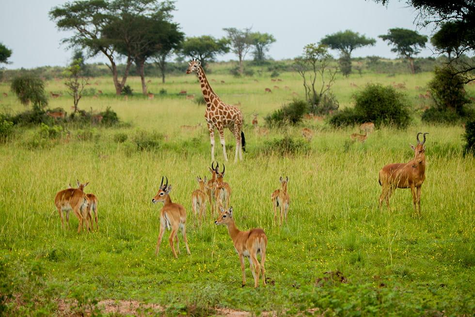 explore-uganda-01