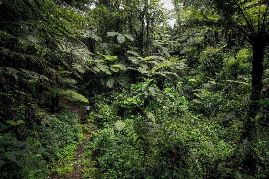 vegetazione-uganda