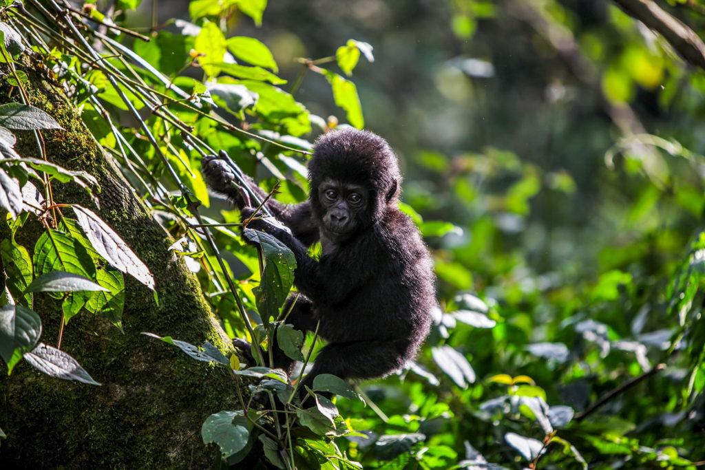 explore-uganda-15